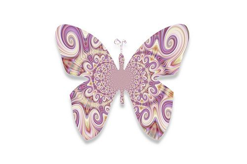 butterfly728   Flickr - Photo Sharing!