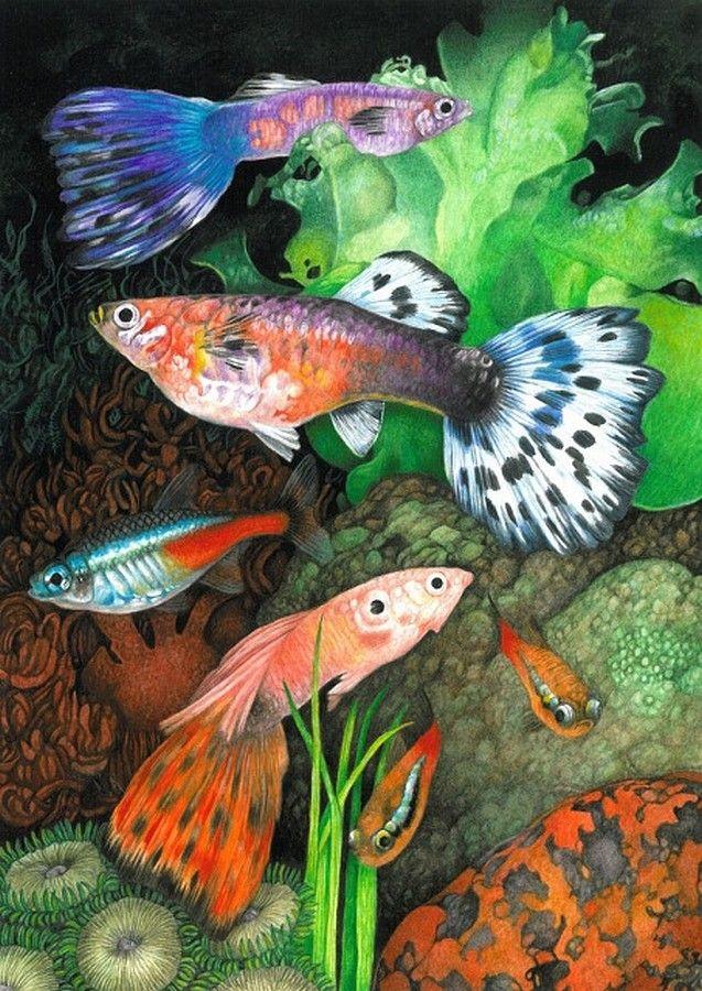 Avril Haynes —  Fish   (637x900)