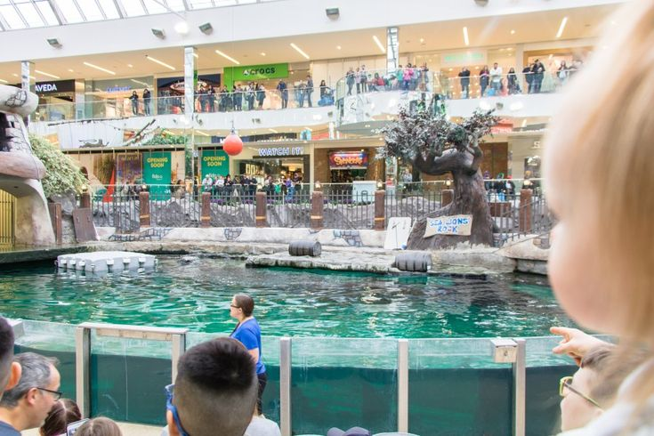Sea Lion's Rock Show at WEM - West Edmonton Mall Marine Life - Indoor Family Activities in Edmonton