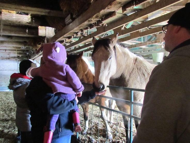Madison feeding the horses