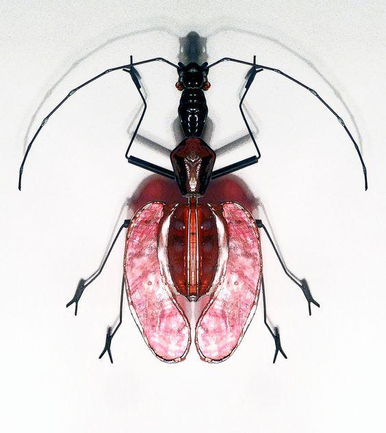 Mormolyce phyllodes / Violin Beetle / insect / Bug / glass nacar ...
