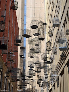Birdcages on clothes lines in Sydney, Australia