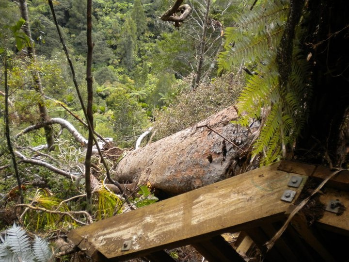 When walking the Waitakeres be prepared for the unexpected (Waitakere Dam Walk)