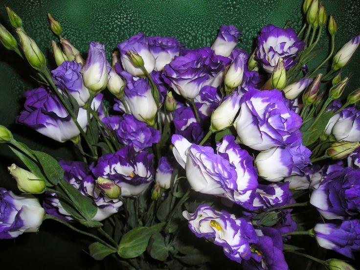 Lisianthus Flowers | Lisianthus, Lisianthus Flower, Lisianthus Flower Meanings, Lisianthus ...