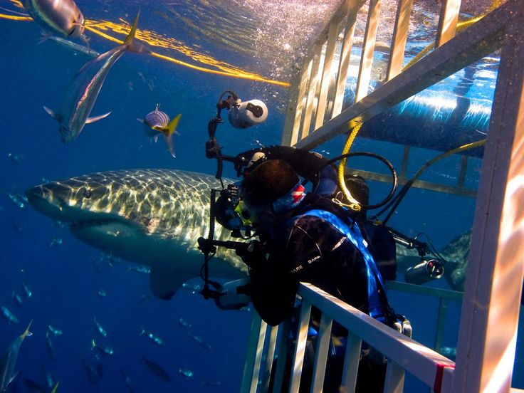 Great White Shark Cage Diving (Guadalupe Island, Mexico) : 101 Amazing Thrills Pictures : TravelChannel.com