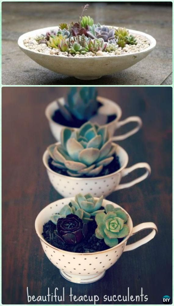 25 best ideas about indoor succulent garden on pinterest indoor succulents indoor succulent - Best indoor succulents ...