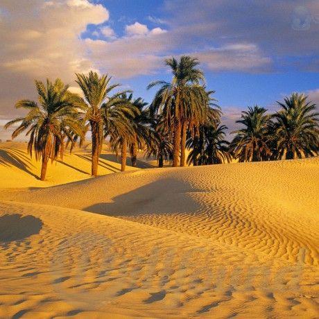 Тунис (бескрайне песчаные пляжи) из Киева регулярно!!!