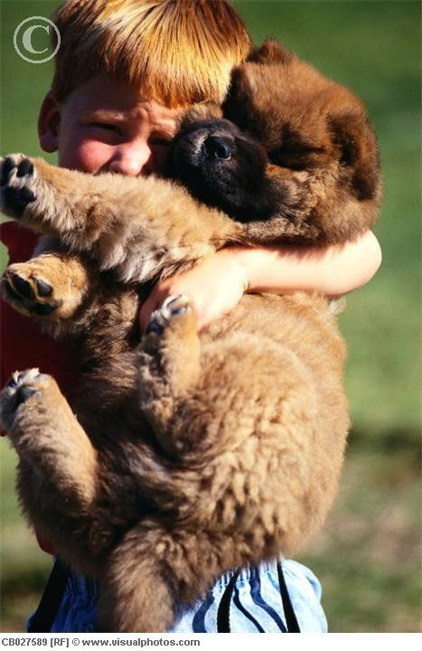 chow chow puppy :]