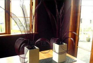 Hapene display