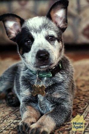 Sweet little pup!