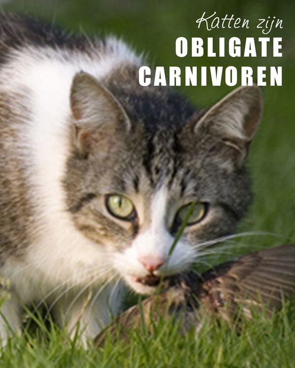 #Katten zijn obligate carnivoren