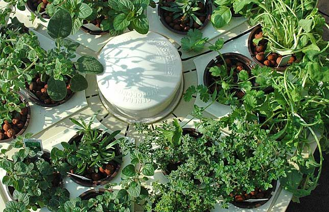 Hydroponic gardening can fulfill your desire to raise a garden without actually getting your hands in the dirt.