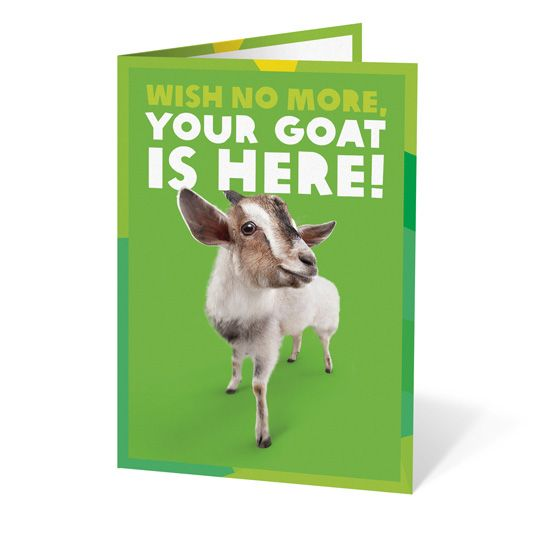 Oxfam Unwrapped Goat | Charity Gifts & Gift Cards - Buy Online! | Oxfam Unwrapped