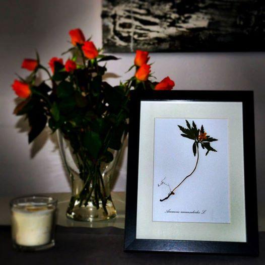 Flora Concept w Twoim domu:)