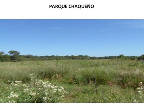 Los Chaguares, o cómo salvar el bosque nativo del Chaco - Infobae