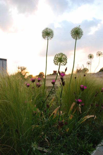 Holland Park roof garden. Plant list at http://www.shootgardening.co.uk/article/roof-garden-in-holland-park