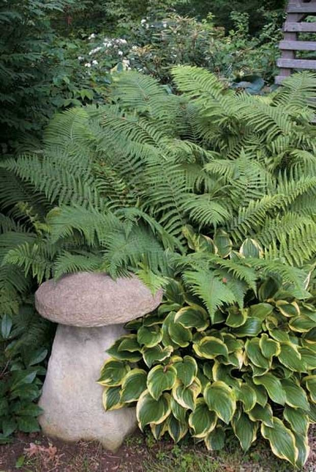 Excellent writeup - original info - for dry shady area. ..Shady business: There are plenty of plants that will thrive away from sunlight - What do you do with that dry, sheltered patch in the garden? Don't just stick a shed there, says Graham Rice - P. setiferum