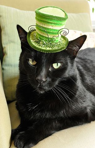 St. Patrick's Day Pets! Virtually eliminate cat odors with CritterZone. http://www.critterzoneusa.com