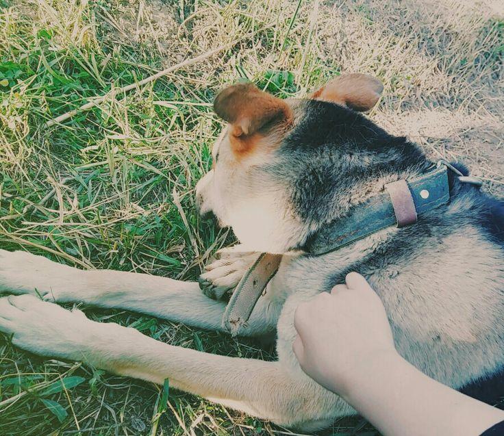 My German sheperd dog