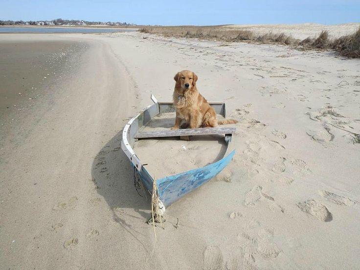 Dog Friendly B B Long Island M