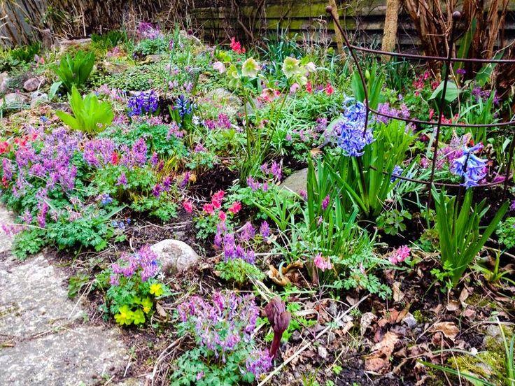 Idag har jag haft årets allra första heldag i trädgården. Började med att plantera om mina pelargoner och tomatplantor. Perfekta förhåll...