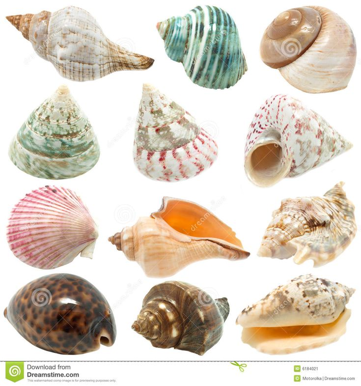 Best Beaches In Maine For Seashells