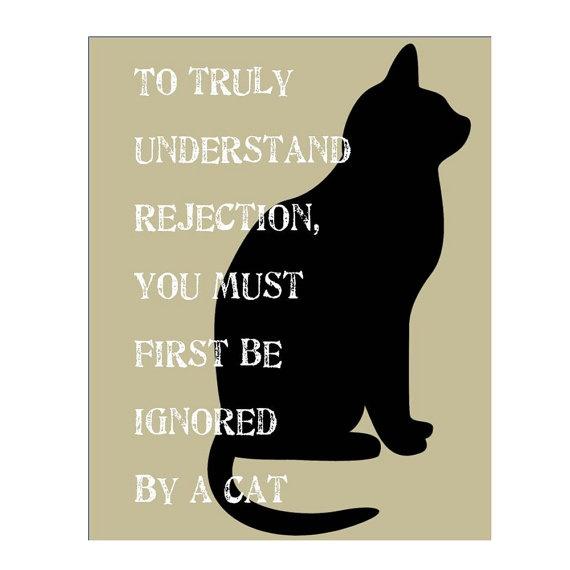 Rejection: Cat Amusement, Cats Prrrrr, Cat Rules, Funny Cat, Black Cats, Cat Boards, Cat Silhouette, Cats Amuse, Cat Lady