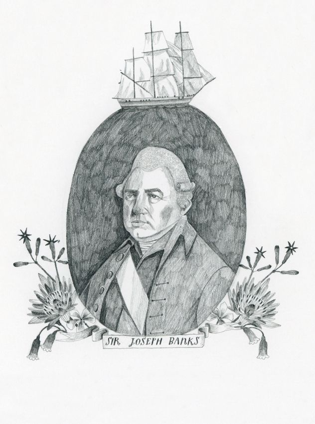 Sir Joseph Banks - Lucy Panes Illustration