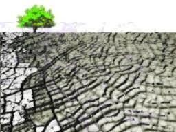 Libro verde y libro blanco de adaptación al cambio climático en Europa