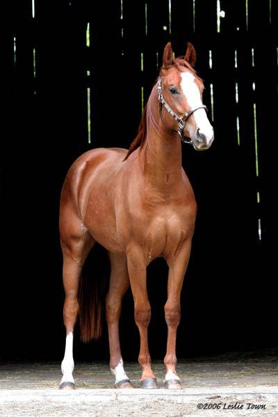 Reminds me of look Horse in North Carolina called Cornelius