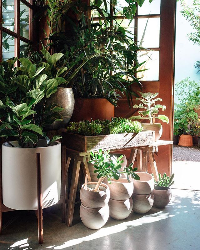 Large Indoor Plants make it easy to create your very own indoor jungle. Here's 8 favorite large indoor plants and how to care for them to get your indoor garden growing.