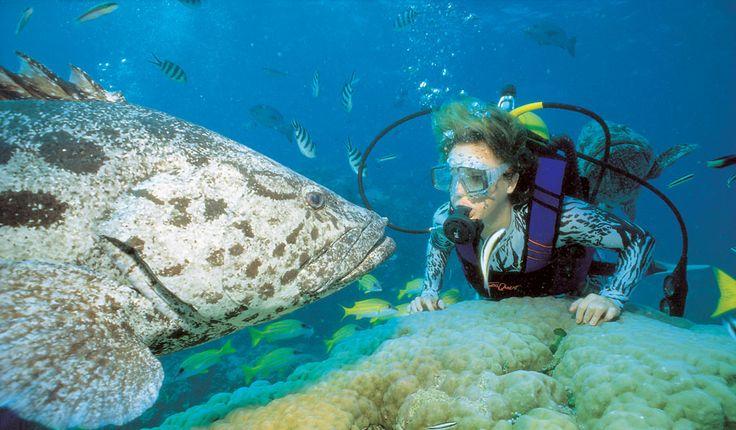 CAIRNS: Dive Great Barrier Reef