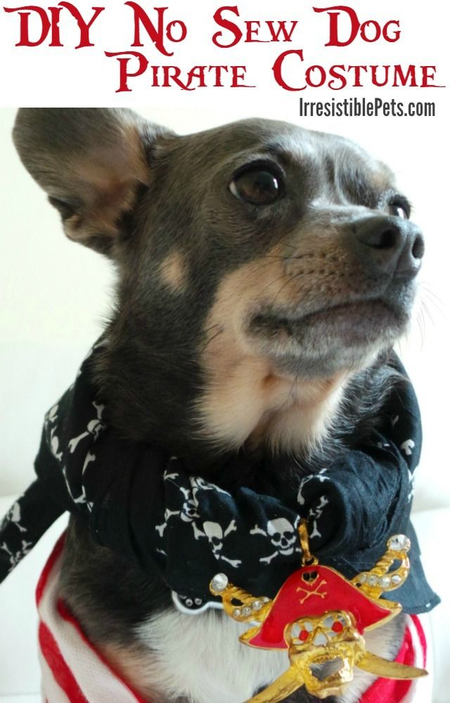 DIY No Sew Dog Pirate Costume Tutorial on IrresistiblePets.com #TalkLikeAPirate
