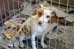 Are Breed-Specific Laws Effective? - BSL ~ via http://www.aspca.org/fight-cruelty/dog-fighting/breed-specific-legislation