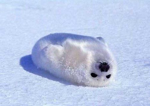 The whitest fluffiest thing i`ve ever seen . . .