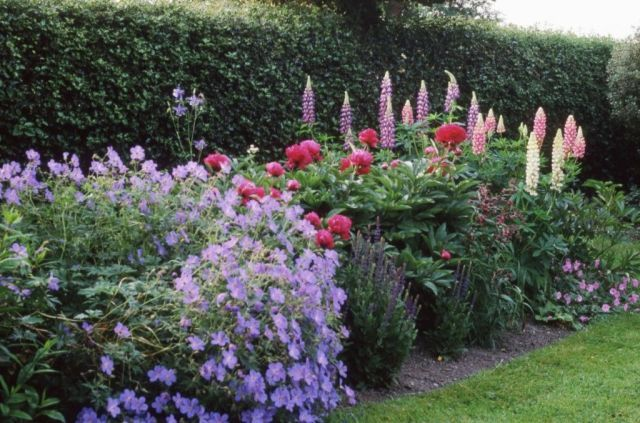 Garden Accessories & Outdoor: How to grow an English country garden