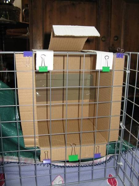 Best images about guinea pig cage on pinterest