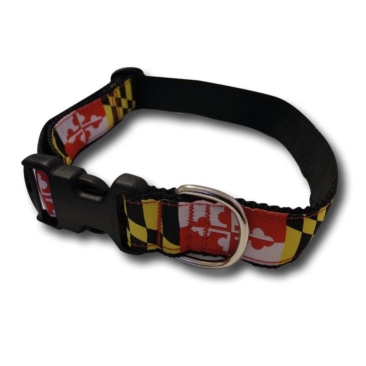 Maryland canine