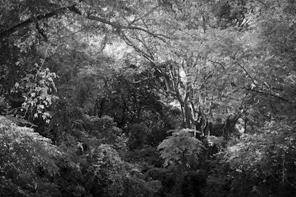 Forest Thailand www.riittasourander.com
