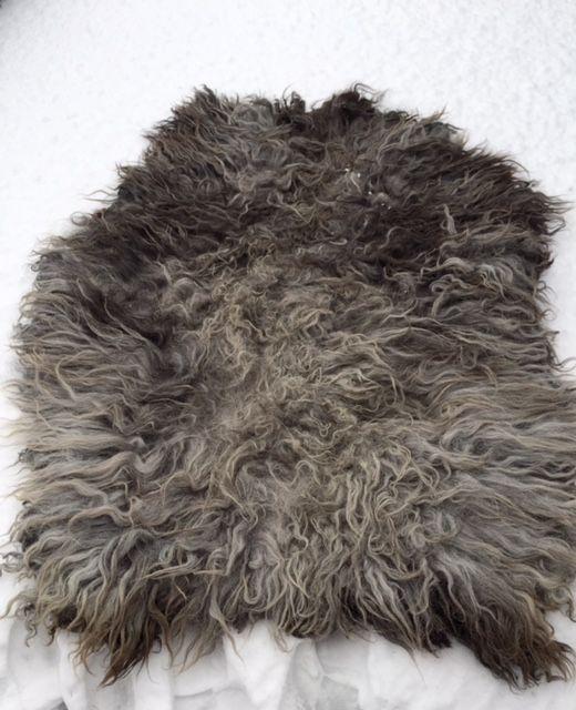 Mega xxl gevilte schapenvacht Siep.  Enorm groot kleed gemaakt van de jas van heideschaap Siep.  klikt u op de foto,s om ze scherp in groot formaat te zien  Het kleedis gemaakt van een a kwaliteit vacht in de kleuren antraciet grijs , licht grijs en op het midden wat beige puntjes.  Siep zijn jas heeft een grote afmeting van : 1.60 bij 1.50 . Een grote dikke vacht met prachtige lange lokken. In een natuurlijke vorm.  Vachten als deze zijn zeer zeldzaam en u haalt dan ook een enorm show…