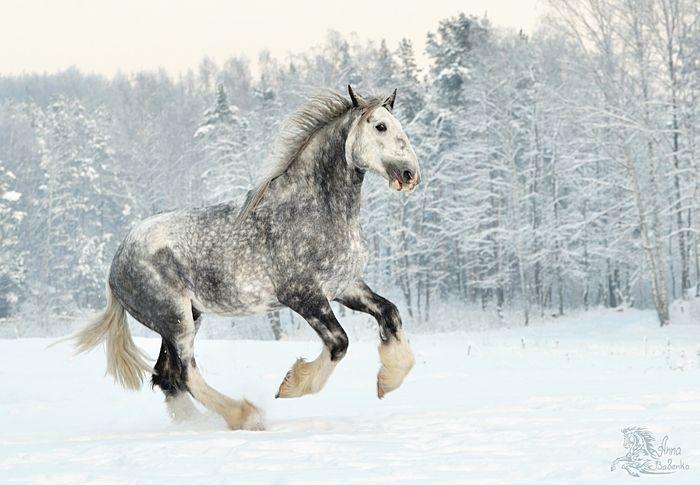 - Featured photos - photos - equestrian.ru