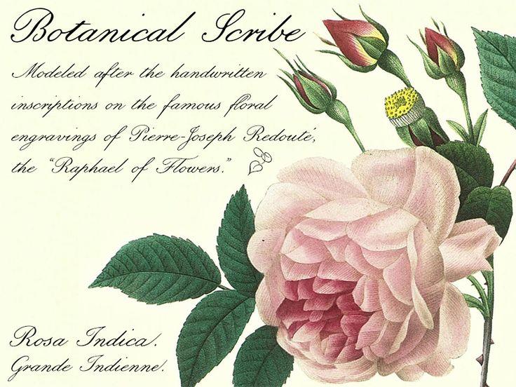 www.oldFonts.com http://www.oldfonts.com/botanicalscribe.html