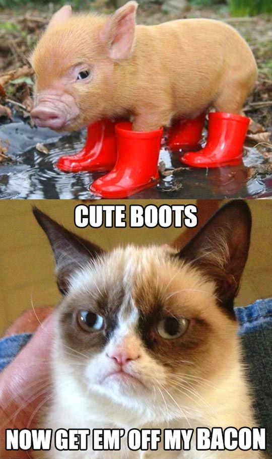 The Adventures of Piggy and Grumpy Cat…