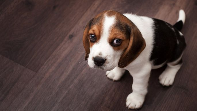 8 Things Pets Secretly Hate About Your Home