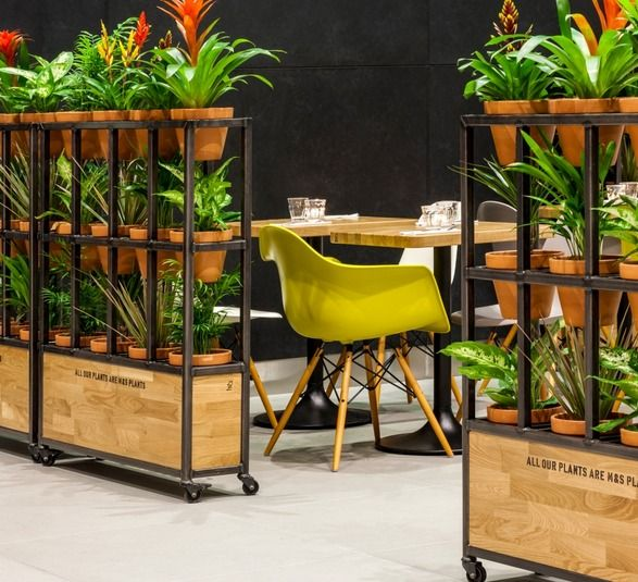 m&s cafè - kiwiandpom #green #plant #screen planter