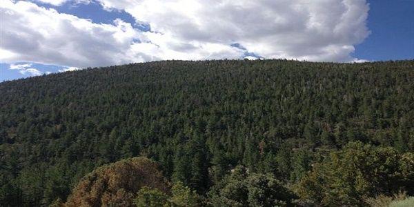 Τα δάση κωνοφόρων επιδεινώνουν την κλιματική αλλαγή