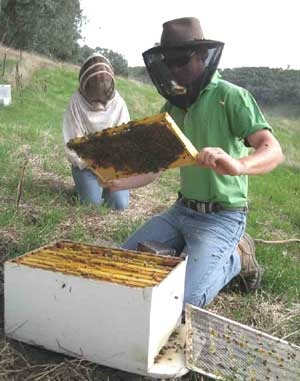Walkabout apiaries in Milawa produce excellent honey.