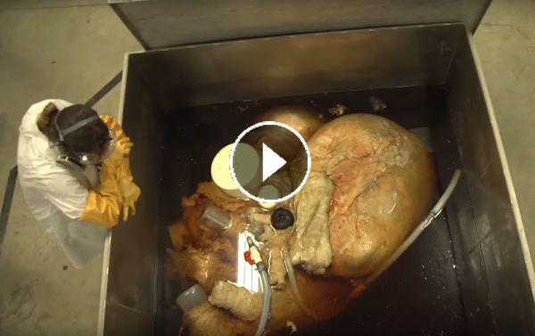 صور قلب الحوت الأزرق صور و فيديو العلوم سبيلنا Chicken