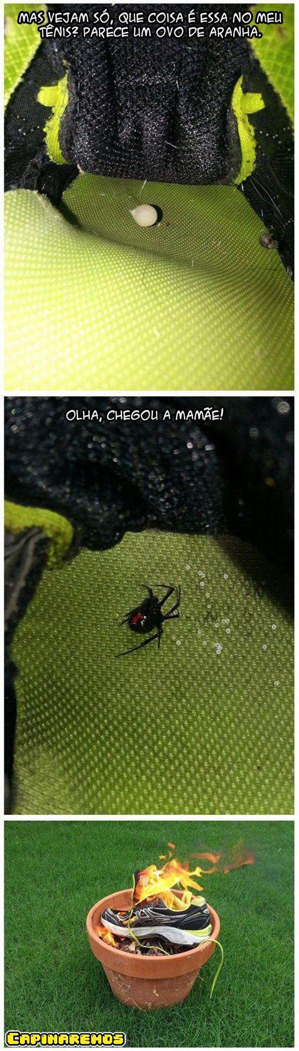 O que fazer quando você observar aranhas em seus tênis.