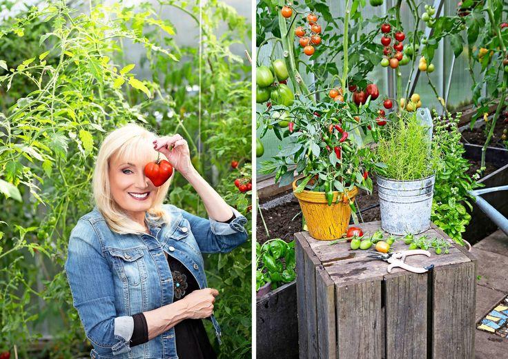 Sonja Lumpeen kasvihuone on hänen puutarhansa sydän. Lukemattomien tomaattien lisäksi siellä viihtyvät chilit, kurkut, viiniköynnökset ja basilikat.
